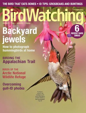 BirdWatching USA - May/June 2018