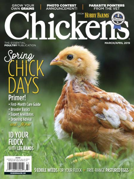 Chickens - March-April 2019