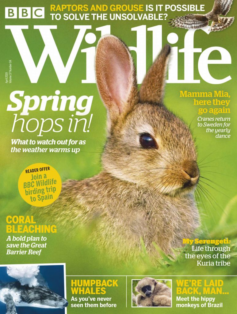 BBC Wildlife - April 2019