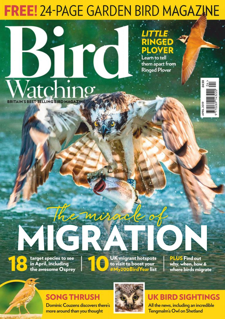 Bird Watching UK - April 2019